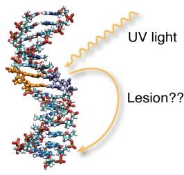 TET-DNA